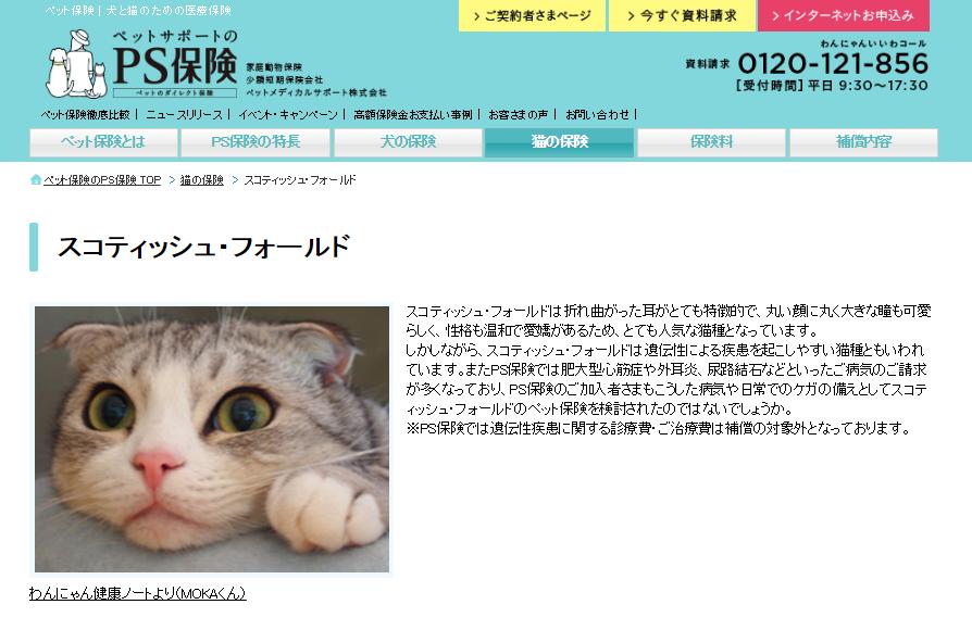 スコティッシュ・フォールド|猫の保険|PS保険